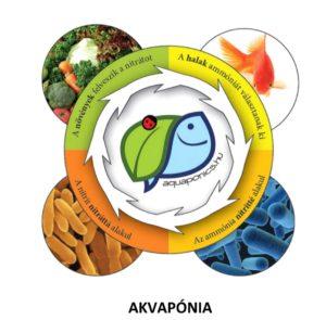 Az akvapónia mezőgazdasági rendszer ipari méretekben való megvalósításának kidolgozása és előkészítése.